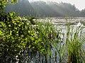 Jezioro Chełm - panoramio.jpg