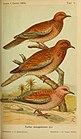 Journal für Ornithologie (1905) (14563469237).jpg