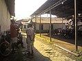 Jual Beli Burung Dara Pasar Sumpiuh, Banyumas.jpg