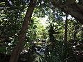 JungleIsland-EvergladesHabitat.JPG