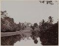 KITLV - 53174 - Lambert & Co., G.R. - Singapore - The botanical garden in Singapore - circa 1895.tif