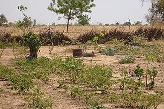 Kaffrine - Image: Kaffrine Agroforestry