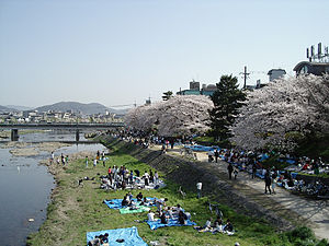 Hanami parties along the Kamo River.