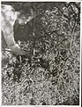 Kapiti Island - Wild Kaka being fed by hand.jpg