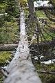 Karst springs Alberta Canada (27871752901).jpg