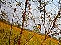 Kaziranga bird.jpg