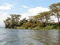 Kenya 2013. Lake Naivasha. - panoramio (25).jpg