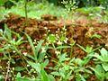Kerala wild plants3.jpg