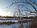 Kerry Wood Nature Conservatory (32599570200).jpg