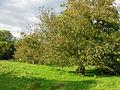 Kerse Castle - old orchard.jpg