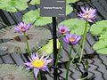 Kew Gardens 0403.JPG