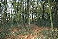 Kingley Wood - geograph.org.uk - 598305.jpg
