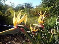 Kirstenbosch National Botanical Garden by ArmAg (7).jpg