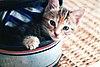 Kitten in a helmet.jpg