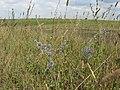 Kurkinsky District, Tula Oblast, Russia - panoramio - izzoo (6).jpg