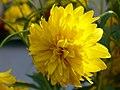 Květina - Slunce.JPG