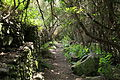La Palma - Garafía - LP-1 - Parque Cultural La Zarza 17 ies.jpg