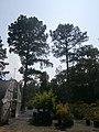 Lamar County, MS, USA - panoramio (7).jpg