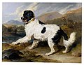 Landseer, Edwin Henry (Sir, RA) - Lion- A Newfoundland Dog - Google Art Project.jpg