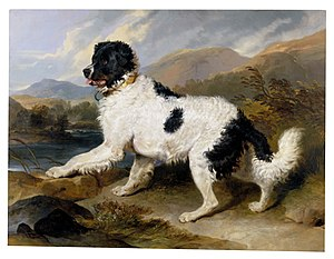 Landseer dog - Sir Edwin Landseer depicting a white and black Newfoundland