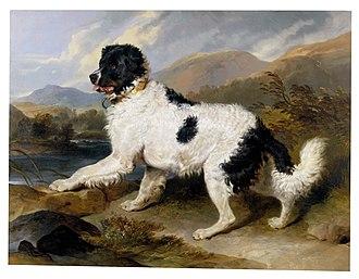 Landseer dog - Sir Edwin Landseer depicting a white and black Newfoundland