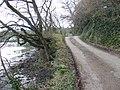 Lane by Gillan Creek - geograph.org.uk - 411800.jpg