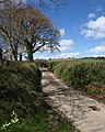 Lane to Frost Cross - geograph.org.uk - 1252299.jpg
