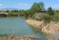 Las Vegas Wash wetlands 1.jpg