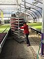 Lauri Roberts, owner of Farming Turtles (28094334309).jpg