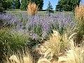 Lawson Gardens (10489714894).jpg