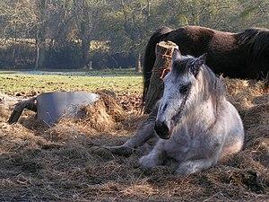 English: Lazy Sunday aftenoon Horse chilling o...