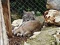 Le Lynx (2379440919).jpg