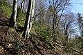 Leitenwälder der Isar 0656.jpg