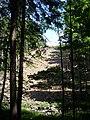 Lesní stráň nad jezem.jpg