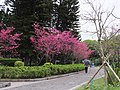 Liberty Square 自由廣場 - panoramio.jpg