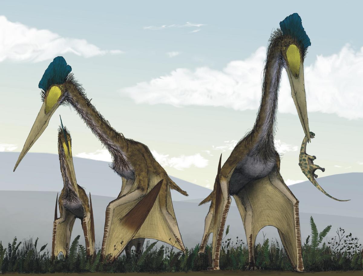 Rekonstruiertes Lebensbild sich vierbeinig fortbewegender Quetzalcoatlus. Einer hat einen juvenilen Titanosaurier erbeutet.