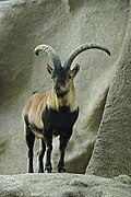 Lightmatter ibex.jpg