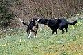 Lilo a Wesley an der Péitruss-113.jpg