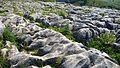Limestone Pavement. Malham Cove - Flickr - gailhampshire (1).jpg