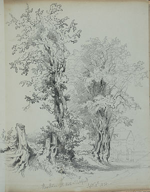 Wall, Staffordshire - Hawthorn trees at Wall, sketched in 1838