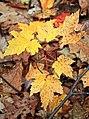 Lingering Autumn (4) (10791979785).jpg