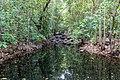 Litchfield National Park (AU), Florence Creek -- 2019 -- 3743.jpg