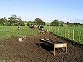 Livestock field - geograph.org.uk - 571856.jpg