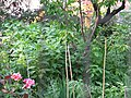 Liz Christy Bowery Garden (27019596).jpg