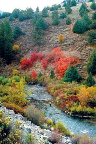 Logan River (Utah-Idaho) - Logan River in the Wasatch-Cache National Forest