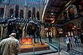 London - Cromwell Road - Natural History Museum 1881 by Alfred Waterhouse - Central Hall - Diplodocus Front.jpg