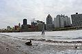 Lone gesse duckling near frozen Allegheny River (11845975444).jpg