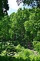 Lutsk Volynska-Dubovyi hai natural monument-view from Zhyduvka river.jpg