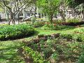 Madeira em Abril de 2011 IMG 1724 (5663182645).jpg
