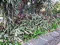 Madeira em Abril de 2011 IMG 1828 (5663692267).jpg